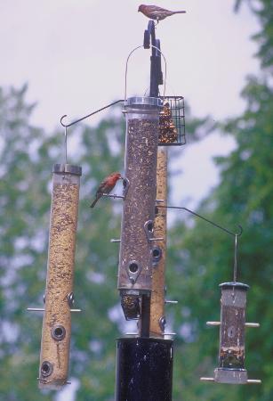 Bed & Breakfast Wellington: Bird Feeder