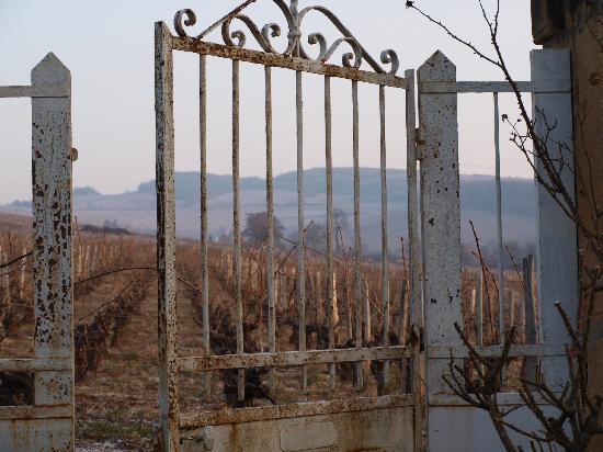 Domaine Rijckaert: Les vignes... pour voisines
