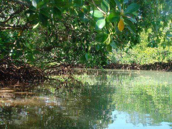 Mayotte : La mangrove