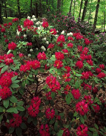 The Holden Arboretum: The Helen S. Layer Rhododendron Garden