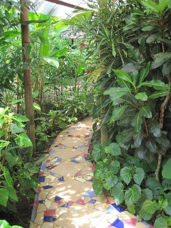 Jacaranda Hotel and Jungle Garden: The garden