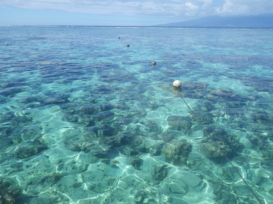 Moorea, French Polynesia: Beautiful coral garden