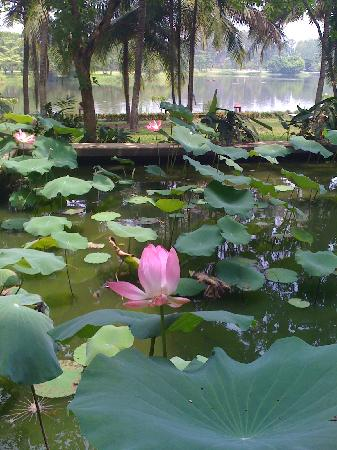 Tawa Ravadee Resort : grounds