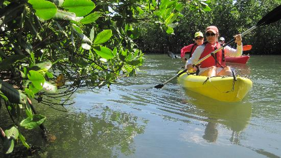 Eco Journeys  Tour: Going into the mangroves.
