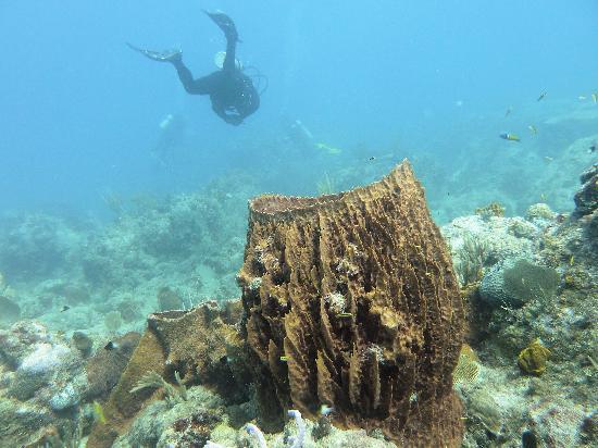 Mamora Bay Divers: Basket coral