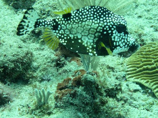 Mamora Bay Divers: Pelnty of reef fish