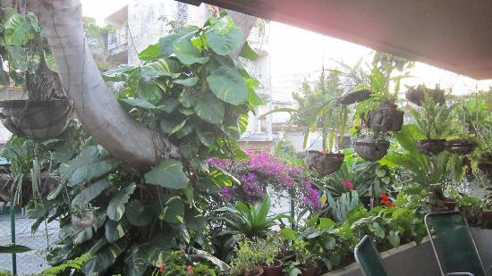 Casa Ileana Perez Valera: Terrace/Garden