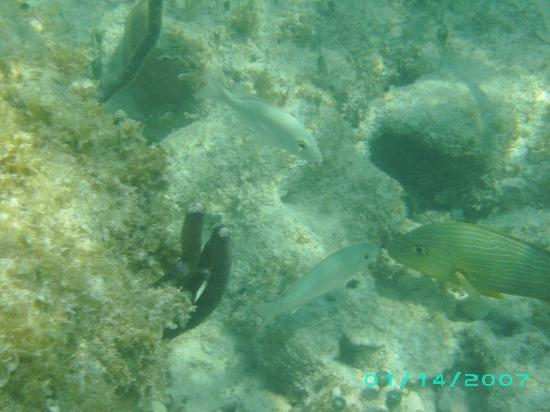 Marina Club Lagoon: fishies kissing