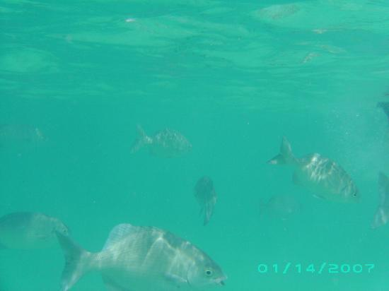 Marina Club Lagoon: fishies