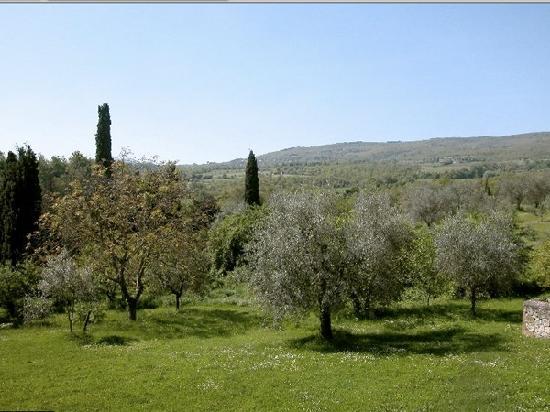 Fattoria Palazzo di Piero : Vista olivi
