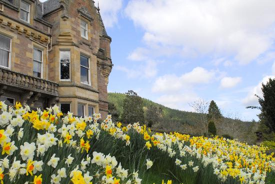 Beauly, UK : Daffodils in April at Aigas