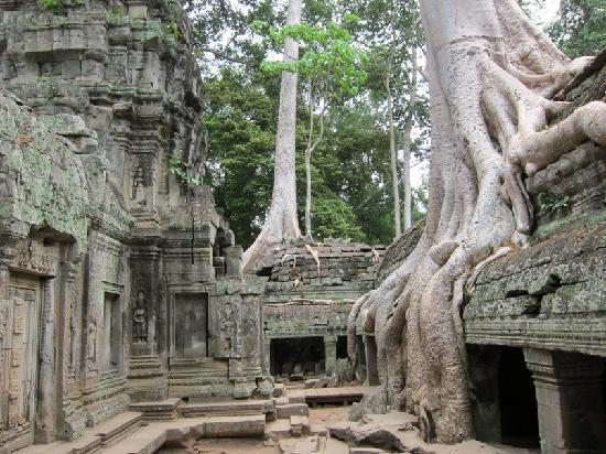 Siem Reap, Kamboçya: Ta Prohm