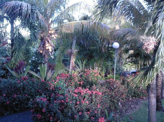 Domaine de Laureal: vue de la terrasse 12/2009