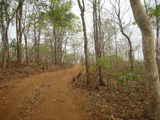 Sajan Nature Club: On The Way