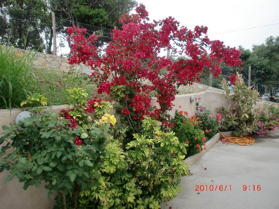 Angeliki Beach Hotel: Flowers in the garden in June