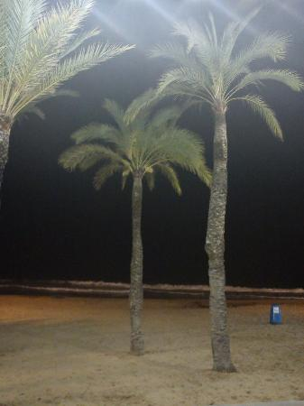 Hotel Rosamar: on the beach at night