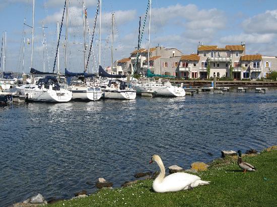 En bordure de mer renesse picture of center parcs for Port zelande center parcs review