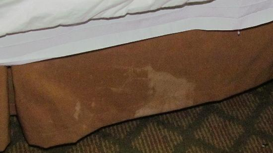 Quality Inn Orlando Airport: bed skirt
