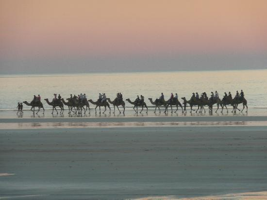 Cable Beachside Villas: Camels on the beach at sunset