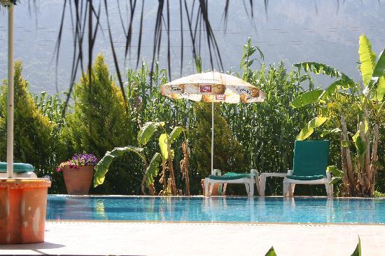 Dalyan Garden Pension: Pool from the garden