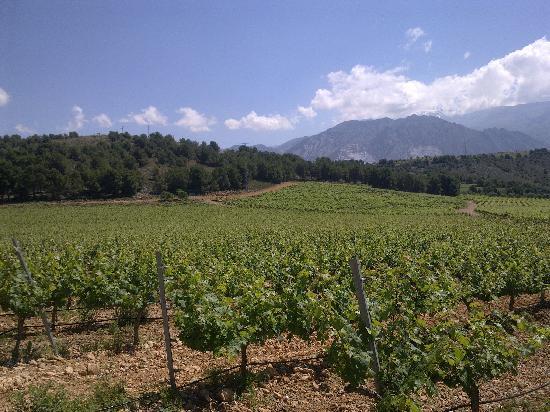 Hacienda Senorio de Nevada: Las Viñas