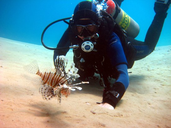 Oonas Dive Club Hotel: Lionfish