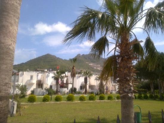 Alta Beach Hotel: View behind the hotel