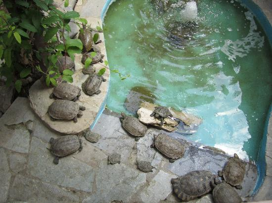 Aquaworld Aquarium & Reptile Rescue Centre: Die s??en Schildkr?ten ...