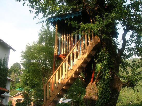 Alps Resort Dalhousie: Tree house