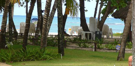 Iberostar Costa Dorada: les palmiers géants