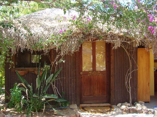 Baja Bungalows: great birdwatching just hanging out by the kitchen