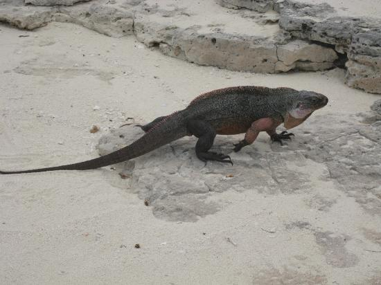 St Francis Resort: Iguana Island...AWESOME!