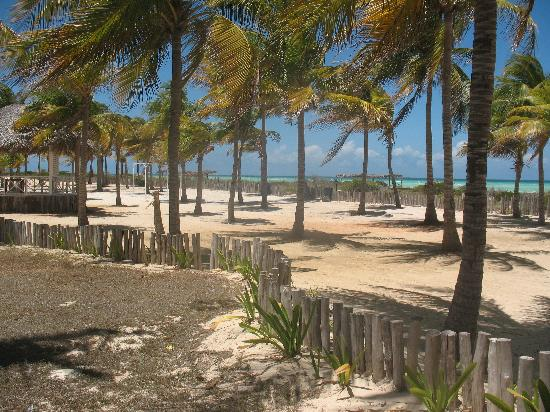 Cayo Guillermo, Cuba: palms