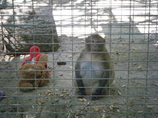 Waccatee Zoo Monkey