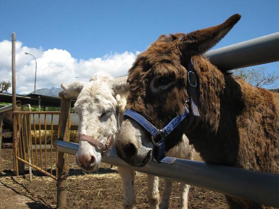 Nerja Donkey Sanctuary: Donkeys