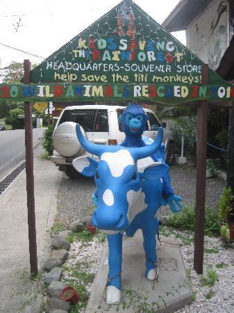 Hotel Mono Azul: Kids Saving the Rainforest @ Mono Azul