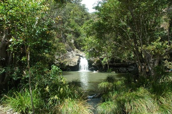 Montville, Australien: Rock pool at Kondalilla Falls