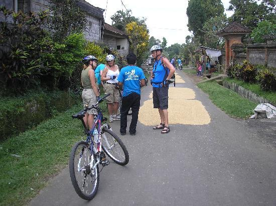 BaliGoBike - Bali Cycling Tours: drying rice at the road