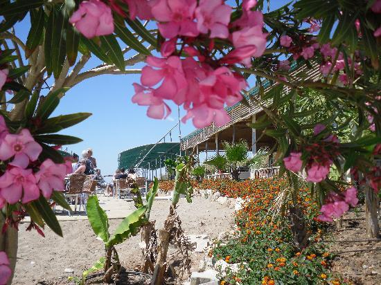 Amelia Beach Resort & Spa: Am Strand