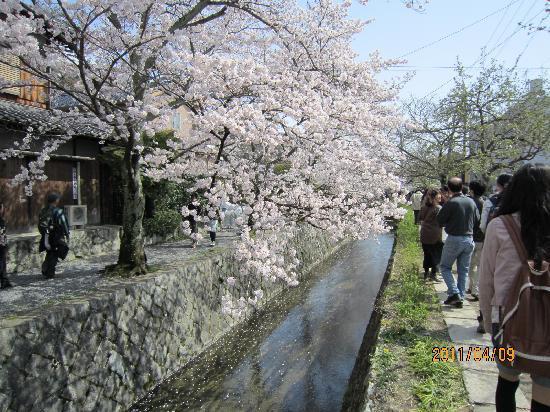 アランヴェールホテル京都, 哲学の道の桜