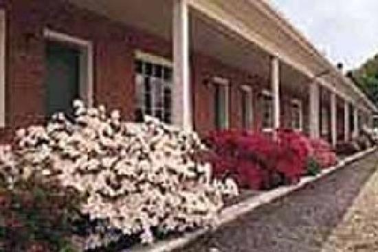 Bassett Motel: spring look