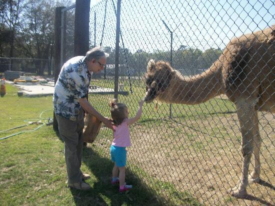 Waccatee Zoo Camels Are My Friend