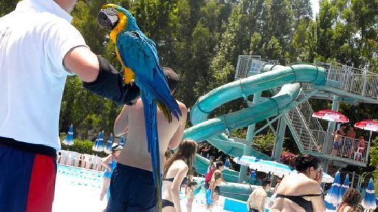 Odissea 2000: scivoli pappagallo