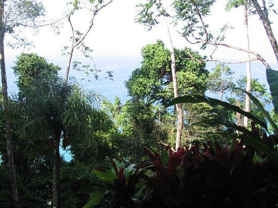 Bosque del Cabo Rainforest Lodge: View from our porch