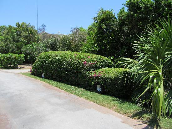Iberostar Ensenachos : Gardeners' beautiful creations