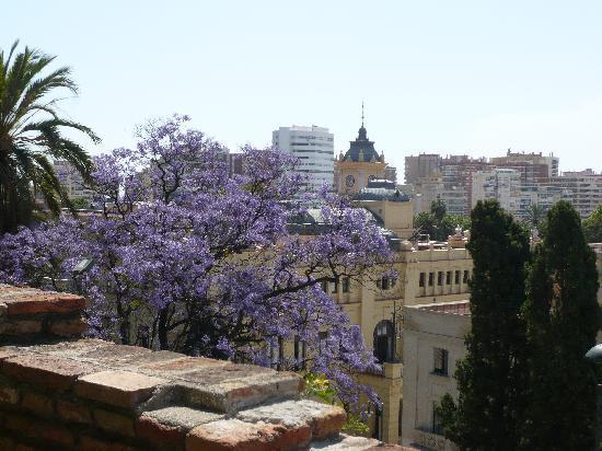 Μάλαγα, Ισπανία: Blick vom Alcazaba auf Málaga und blühende Yakaranda Bäume