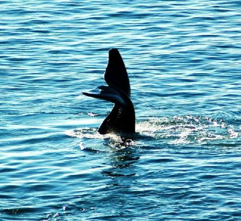 Gordon's Bay, Sudáfrica: Whale watching