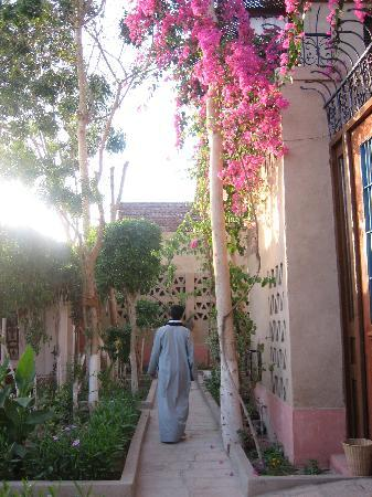 Villa Nile House: Jardin