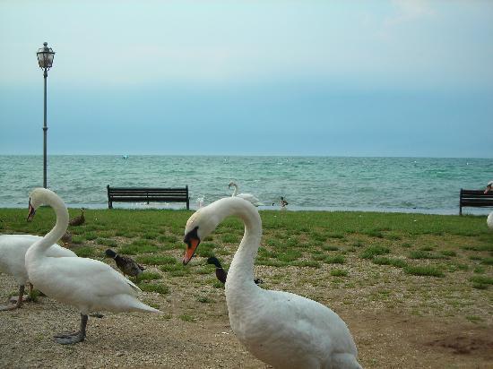 Hotel Bella Italia : il lago
