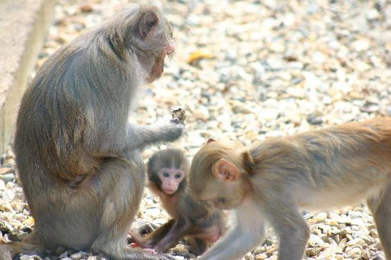 Monkey Haven: Family group